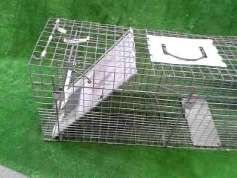 havahart cat trap instructions