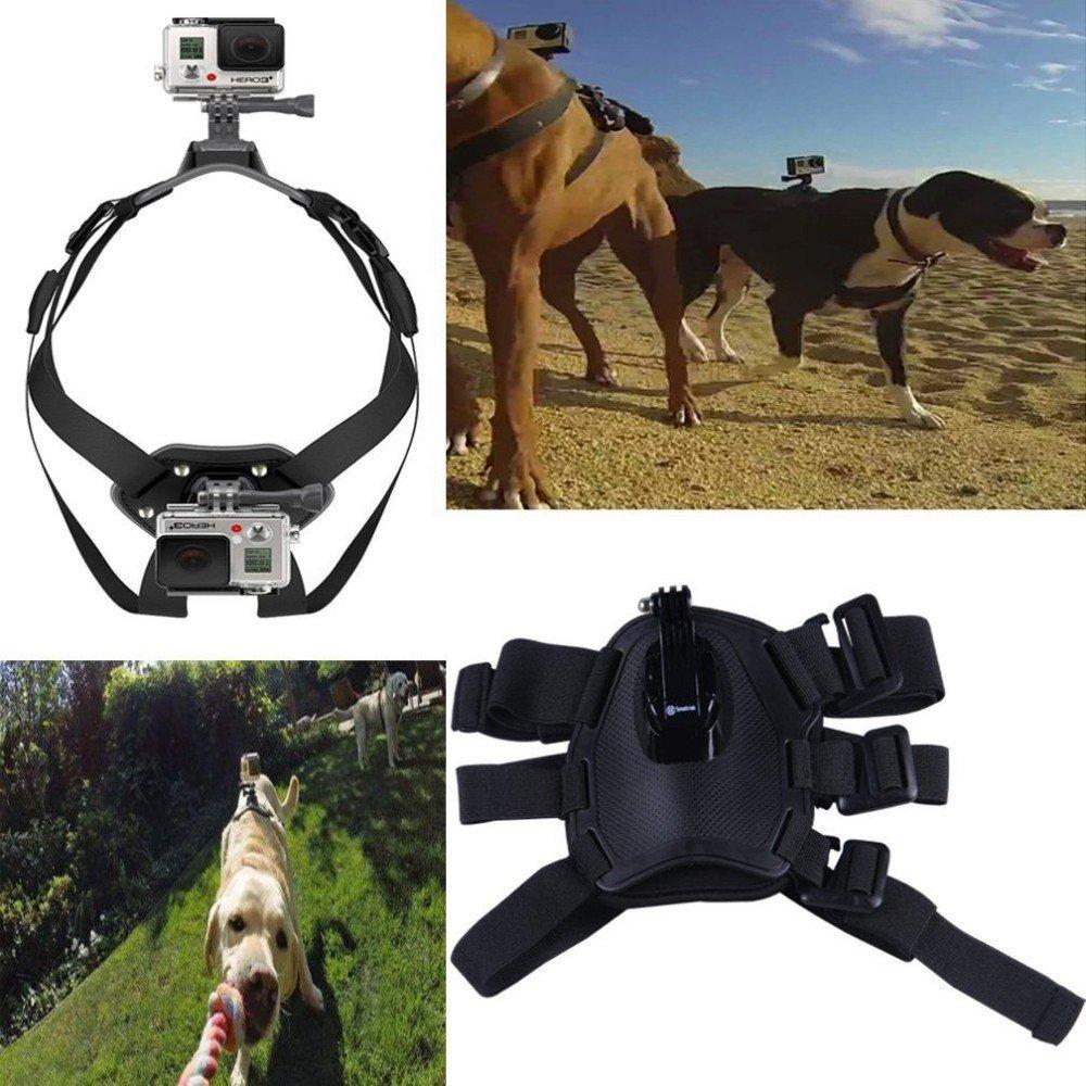 gopro dog harness instructions