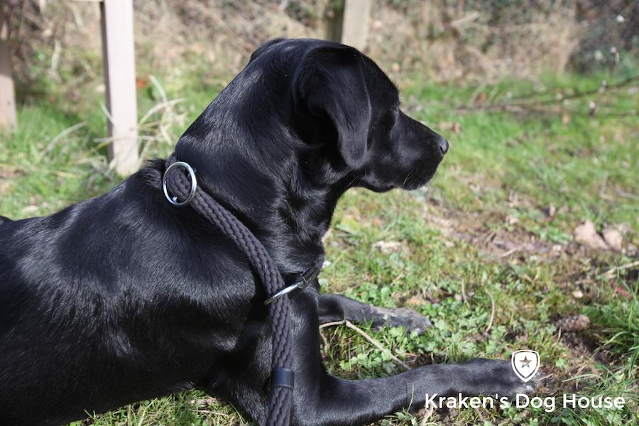 figure of 8 dog lead instructions