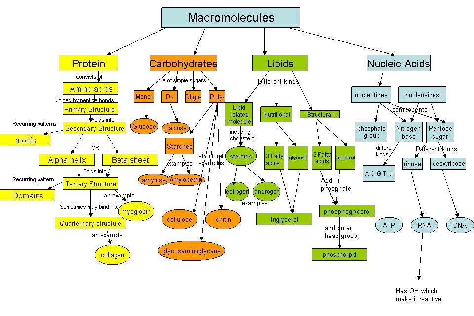 which macromolecules provide instructions for growth