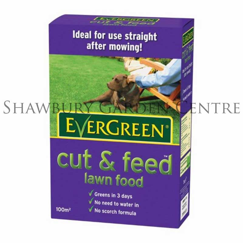 evergreen lawn care instructions