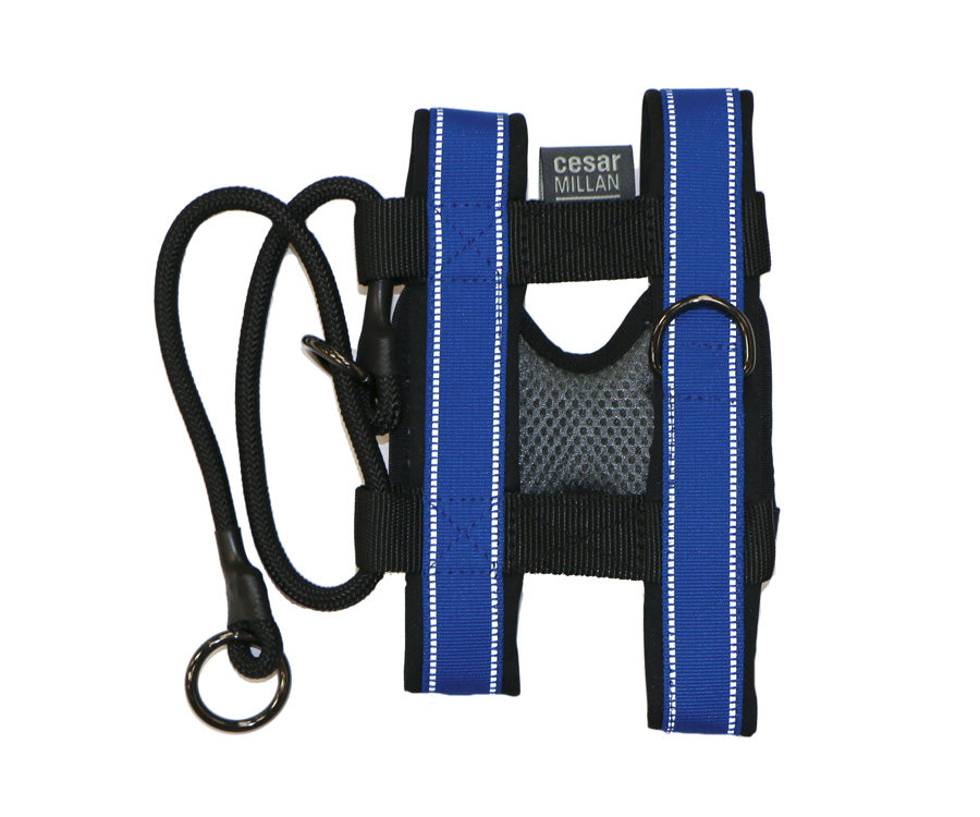 gentle leader dog collar instructions